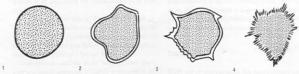 nodule shape