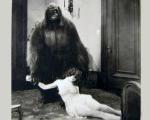 gorillaandwoman