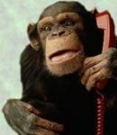 phonemonkey